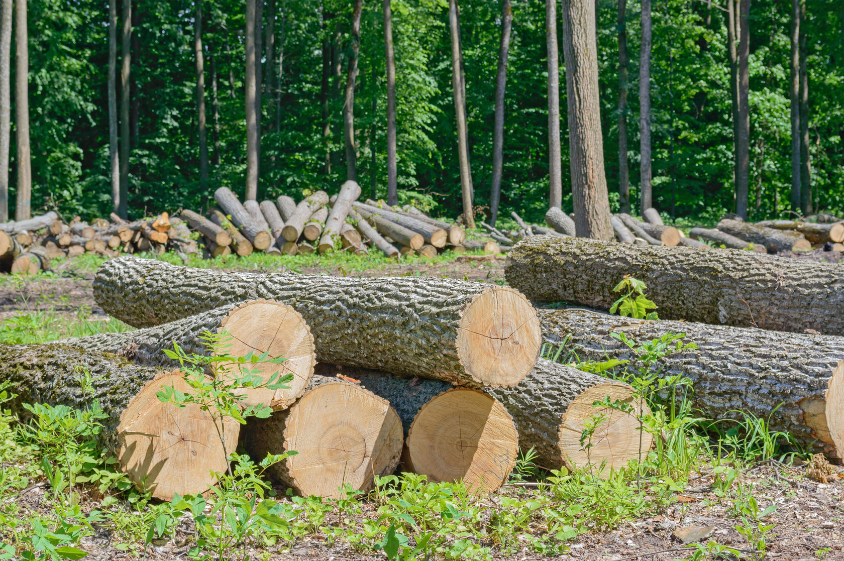 Kontakt - trädfällning lekeberg